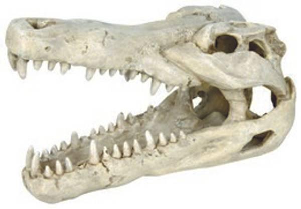 Bilde av Akv. Pynt  Krokodille Hodeskalle 14cm