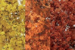 Bilde av Løvtrær og busker