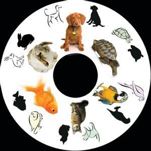 Bilde av SNAP effekthjul Pets