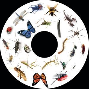 Bilde av Insekter