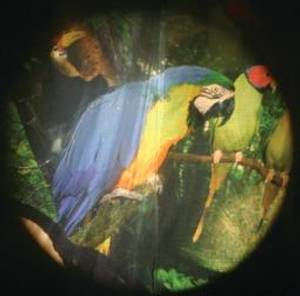 Bilde av Solar effekthjul Tropiske fugler