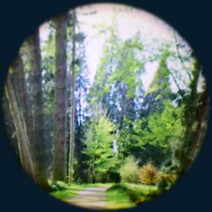Bilde av Solar max effekthjul forest