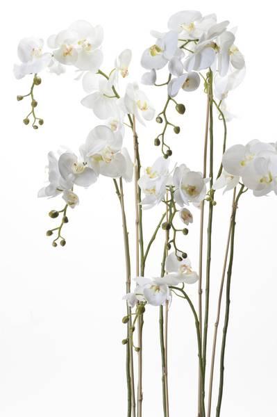 Kunstig Majestetisk Orkide i Mose 145cm