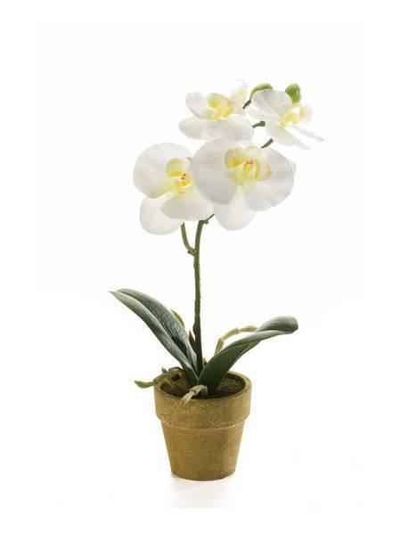 Kunstig Orkide Mini Kremhvit 25cm