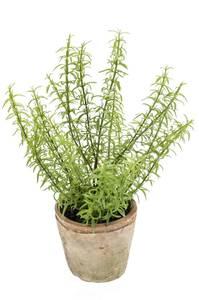 Bilde av Kunstig Rosmarin Plante i Retropotte 30cm