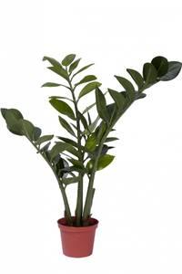 Bilde av Kunstig Smaragdplante 50cm
