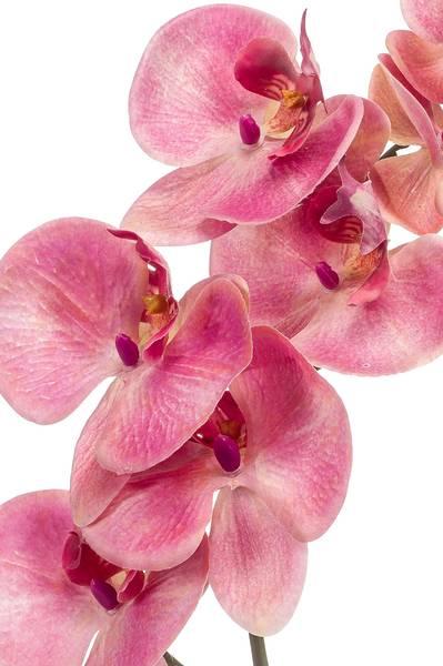 Kunstig Orkide Stilk Rosa 83cm