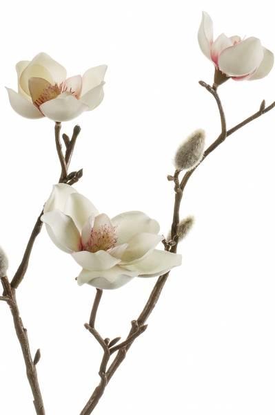 Kunstig Magnolia Stilk Krem/Rosa 65cm