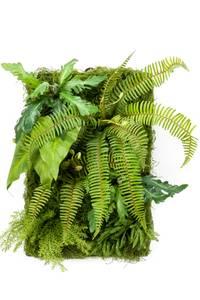 Bilde av Kunstig Plantevegg 60x40cm