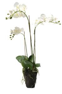 Bilde av Kunstig Orkide Hvit i Jord 75cm