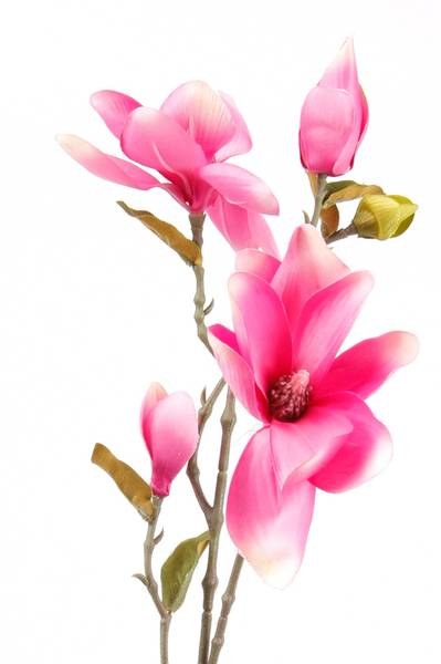 Kunstig Magnolia Stilk Rosa 75cm
