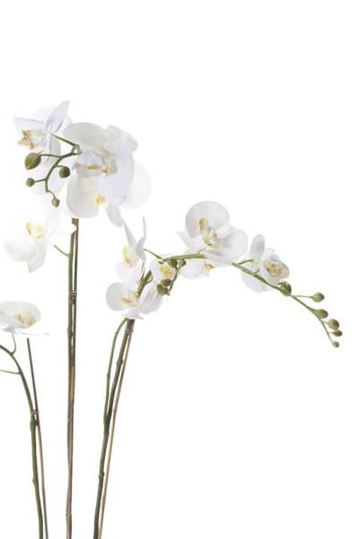 Kunstig Orkide Hvit i Mose 90cm