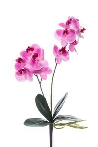 Bilde av Kunstig Orkide Stilk Fuchsia 36cm