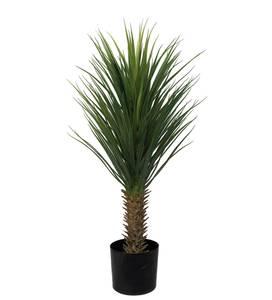 Bilde av Kunstig Yucca Rostrata 100cm