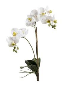 Bilde av Kunstig Orkide Stilk Hvit 65cm