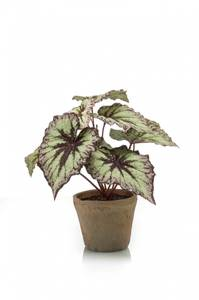 Bilde av Kunstig Begonia Busk i Retropotte Lilla 25cm