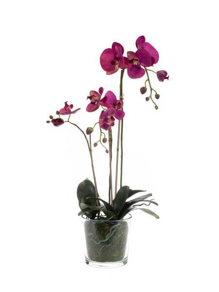 Kunstig Orkide Beauty i Glasspotte 70cm