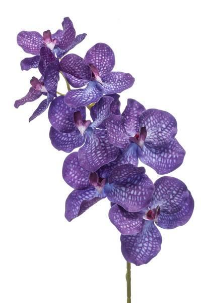 Kunstig Orkide Vanda Stilk Blå 98cm