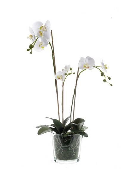 Kunstig Orkide Hvit i Glasspotte 70cm