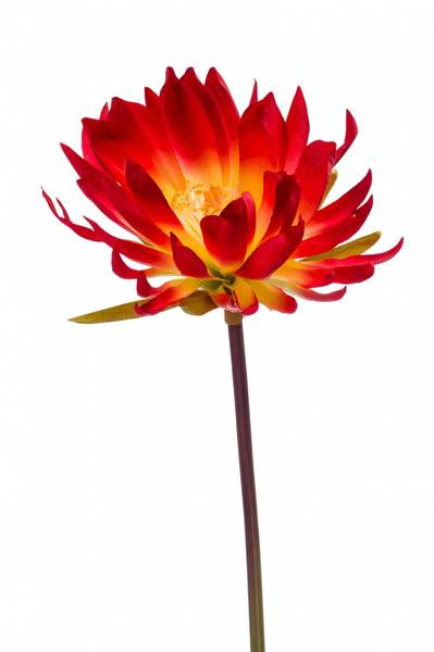 Kunstig Kaktus Stilk Oransje 79cm