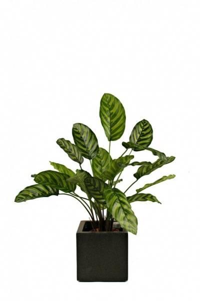 Kunstig Calathea Makoyana 60cm