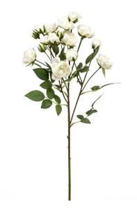 Bilde av Kunstig Minirose Stilk Hvit 57cm