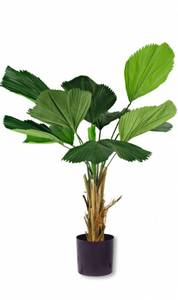 Bilde av Kunstig  Lucuala Grandis plante 120 cm