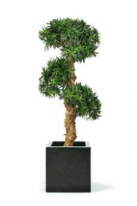 Bilde av Kunstig Podocarpus Bonsai 140cm
