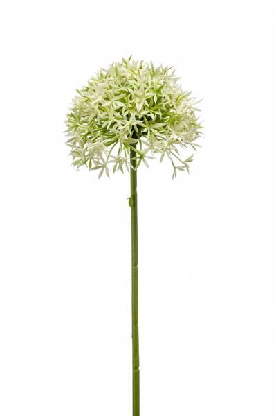 Kunstig Allium Stilk Hvit/grønn 62cm