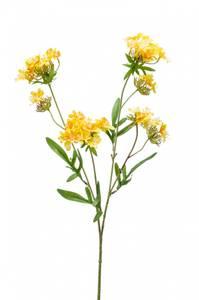 Bilde av Kunstig Verbena Blomst Gul 68cm