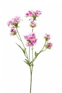 Bilde av Kunstig Verbena Blomst Lilla 68cm