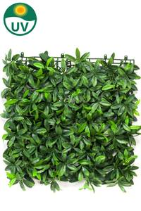 Bilde av Kunstig Pittosporum Plantevegg Matte UV 50x50cm
