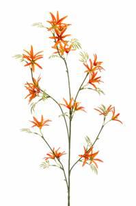 Bilde av Kunstig Tweedia Blomst Oransje 82cm