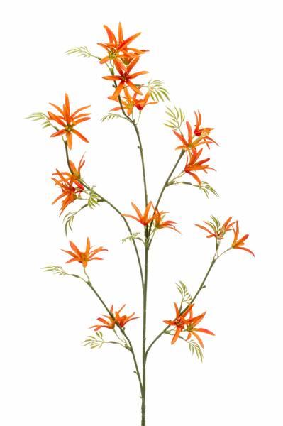 Kunstig Tweedia Blomst Oransje 82cm