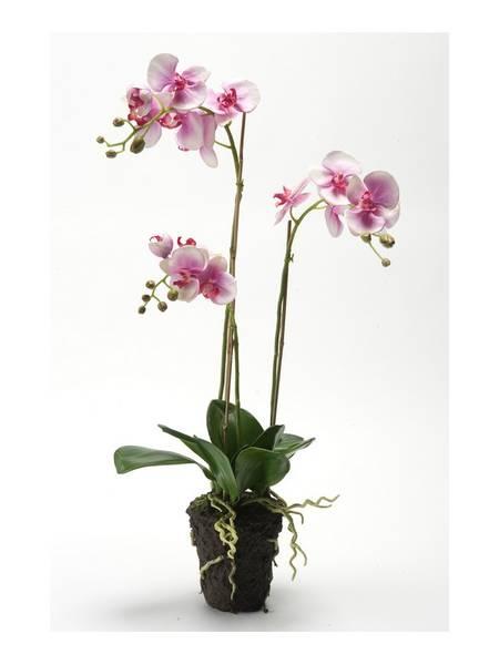 Kunstig Orkide Fuchsa i Jord 75cm