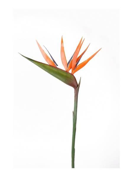 Kunstig Strelitzia Oransje 90cm