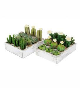 Bilde av Kunstig Kaktus Mix 24stk