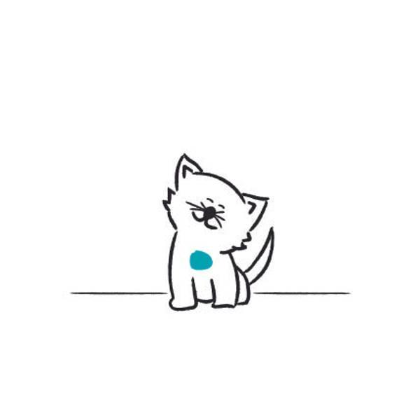 Kort_ Katt