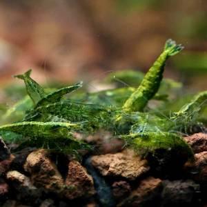 Bilde av Green Neon