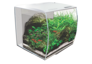 Bilde av Fluval Flex aquarium kit 34L White