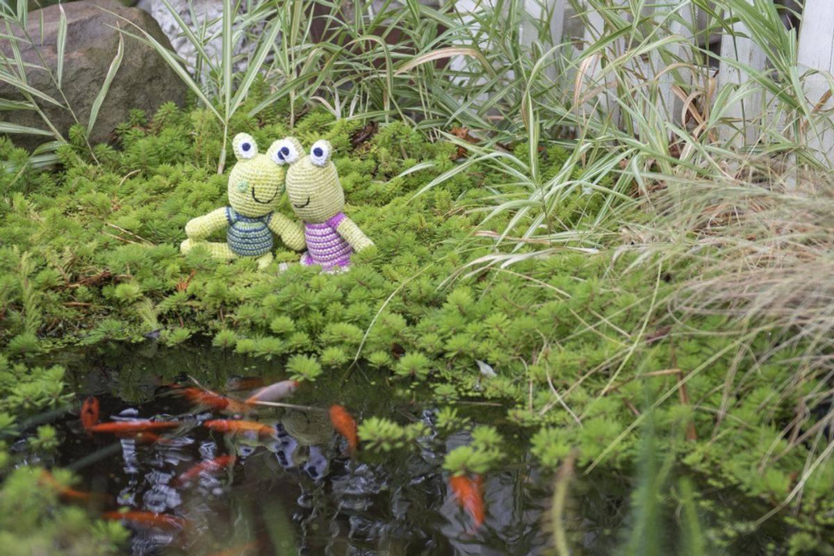 Heklet rangleleke, Frosk / Best Years