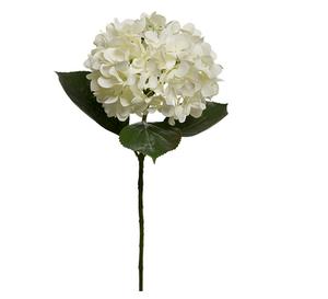 Bilde av Hortensia på stilk  - Hvit