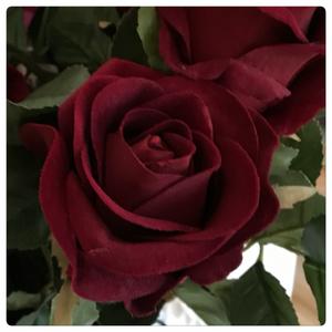 Bilde av Rose - rød
