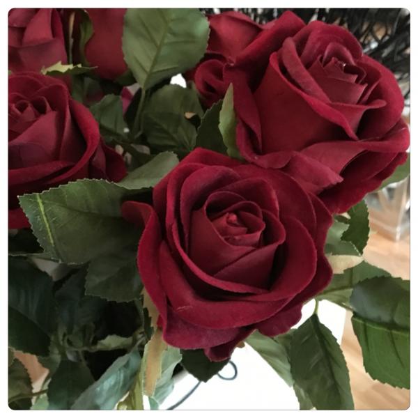 Rose - rød