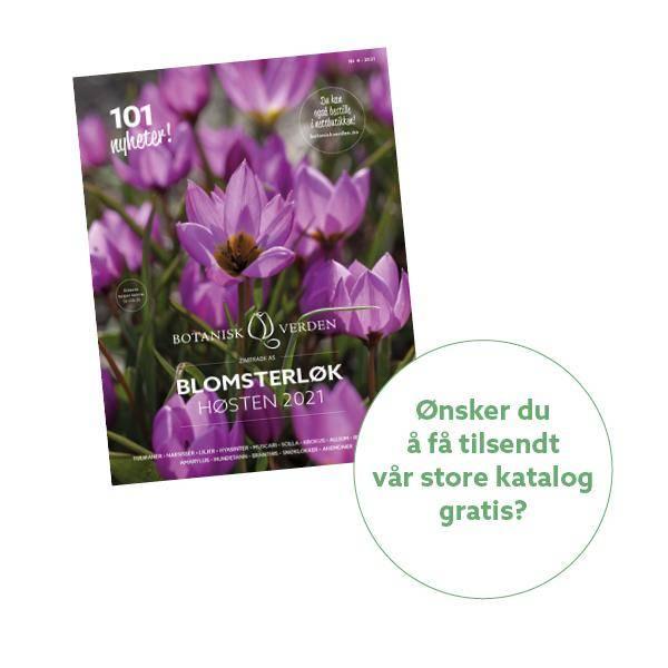 Bilde av Bestill 'Blomsterløk høsten 2021'