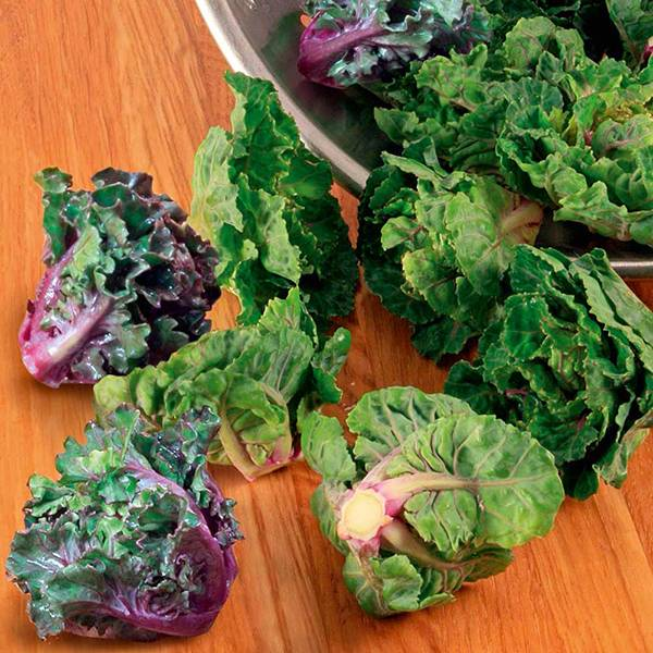 Bilde av Rosettkål Flower Sprout