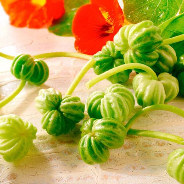 Bilde av Blomkarsesalat Nasturtium Leaves Seeds