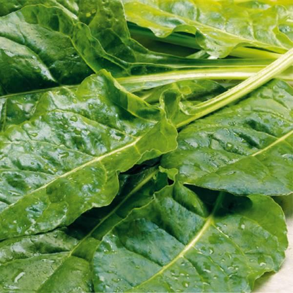 Bilde av SPINAT 'Perpetual Leaf beet'