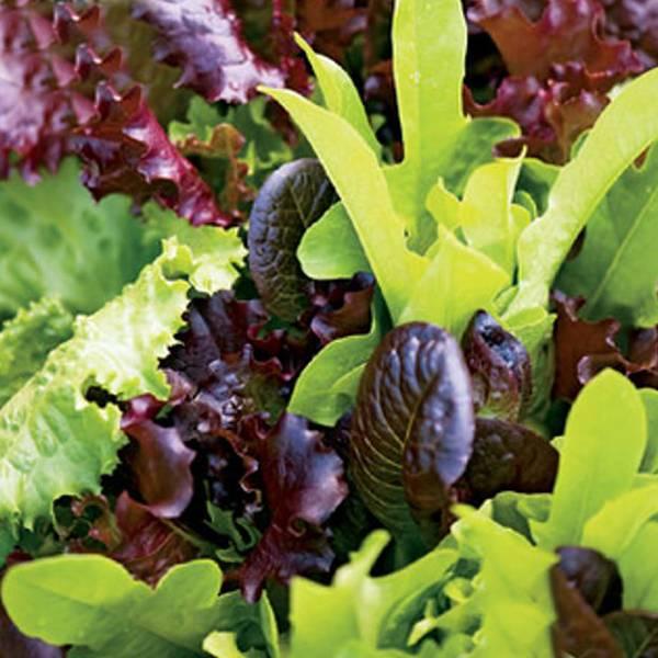 Bilde av Salat Baby leaf mix