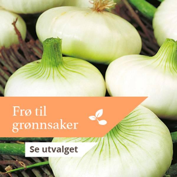 Frø til grønnsaker